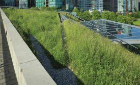 vegetative roofs