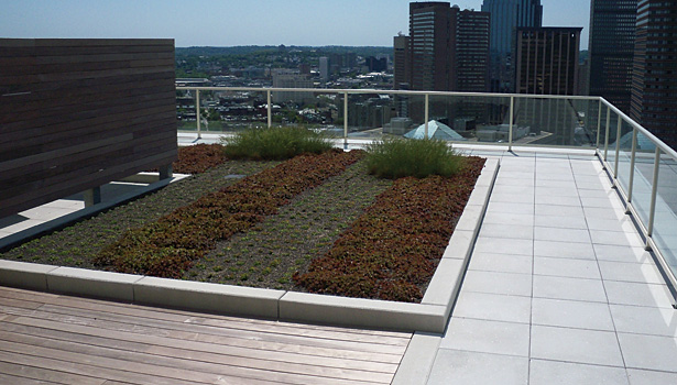 vegetative roof at the Clarendon Condominiums