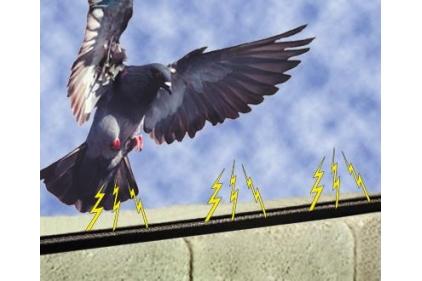 Electric Bird Deterrent System 2014 01 17 Roofing