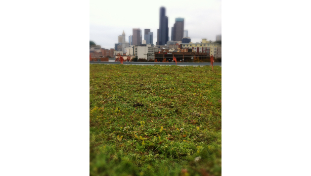 Seattle First Hill Green Roof