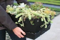 Module Option for Green Roof Systems