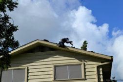 roofers-reroofing